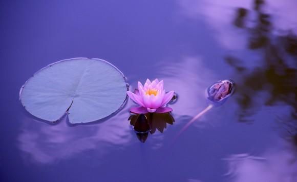 Stressbalance, Achtsamkeit & Meditation in herausfordernden Zeiten
